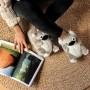 chaussons peluche en forme de koala pour femme et homme
