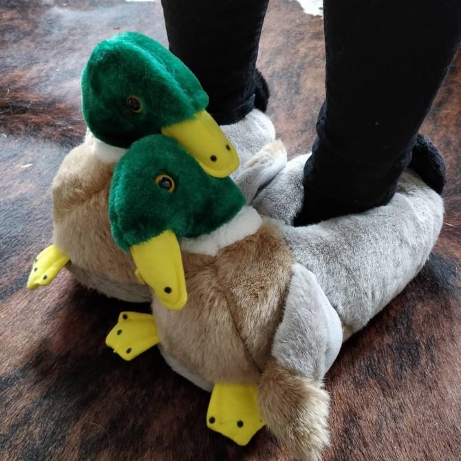 Canard colvert